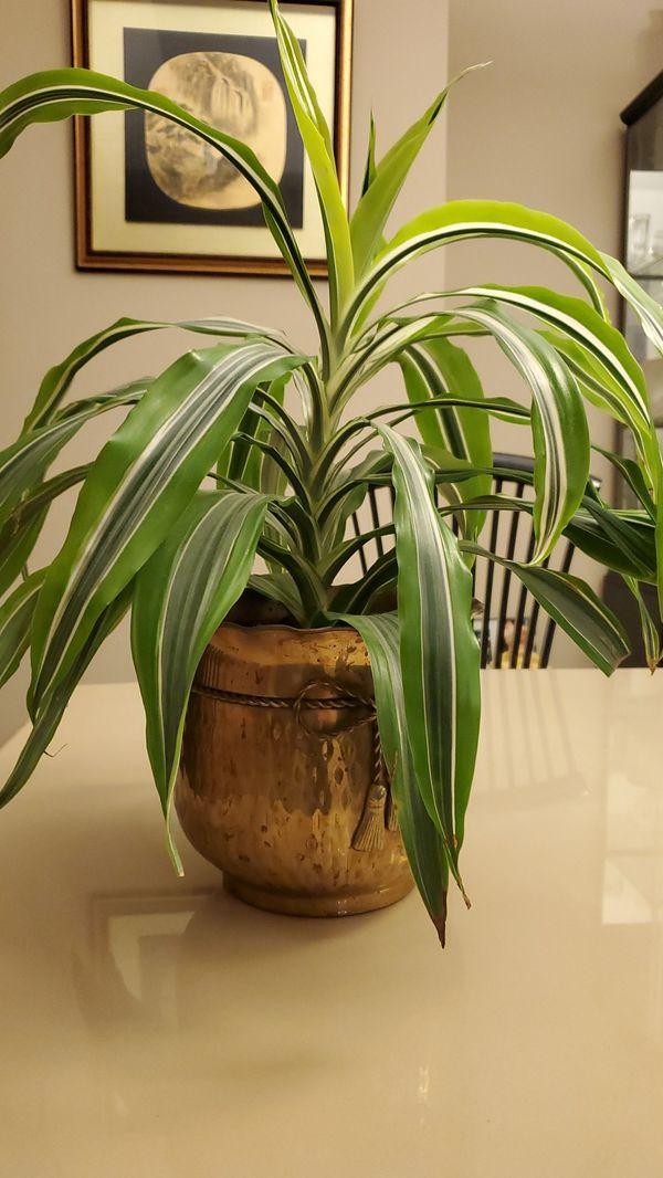 Plant/ Pot