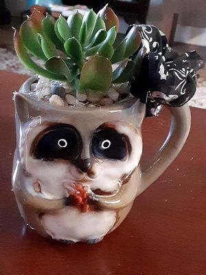 Cute raccoon with a succulent plant for Sale in Mesa, AZ