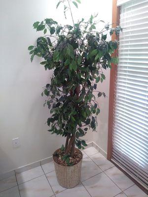 Fake Plant for Sale in Miami, FL