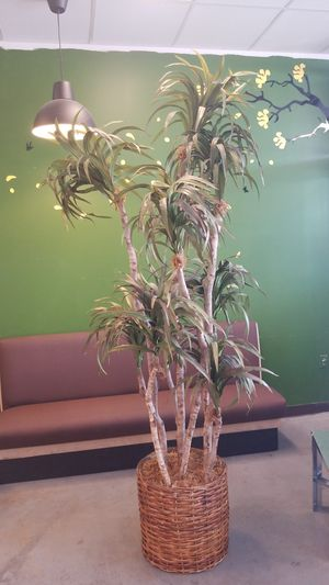 Fake plant for Sale in Fort Worth, TX