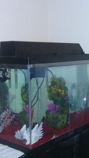 20 Gallon Saltwater aquarium for Sale in Lancaster, CA