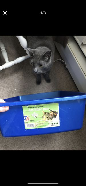 Large cat litter pan for Sale in CT, US