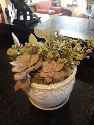 Beautiful ceramic pot with live succulent Arrangement and green sea glass for Sale in Chandler, AZ