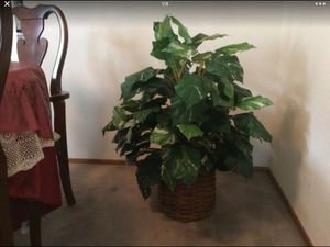 A Beatufill fake plant for $35 for Sale in Hercules, CA