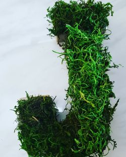 Moss Letters Light Weight for Sale in Hayward,  CA