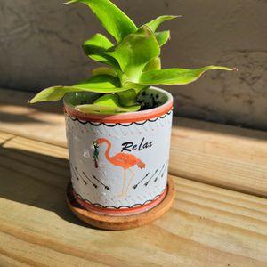 """Basket Plant In 3"""" Ceramic Christmas Pot for Sale in Orlando, FL"""