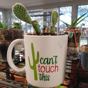 Succulents, cacti, aloes & houseplants for Sale in Coppell, TX