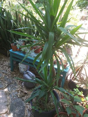Plants for Sale in St. Petersburg, FL