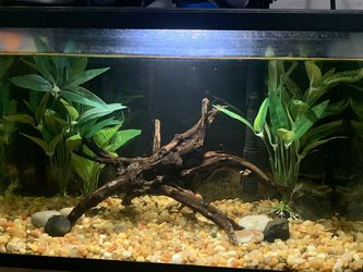 5 Gal Fish Tank W Koi Betta for Sale in San Jose,  CA