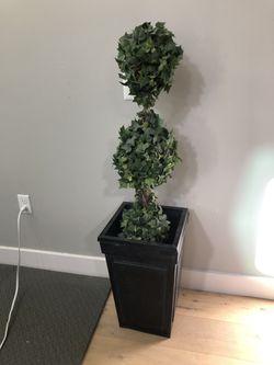 Restoration Hardware Topiary for Sale in Phoenix,  AZ