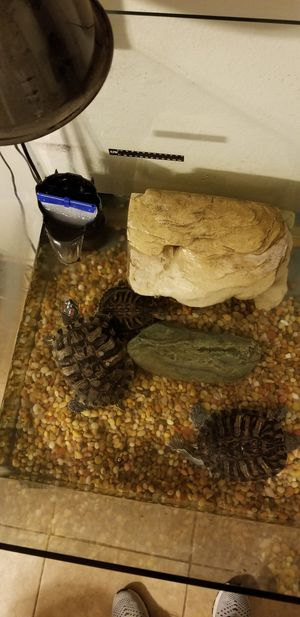 Free turtles with tank for Sale in Hamilton City, CA
