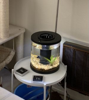 Cylindrical 3.5 Gallon Fish Tank for Sale in Fremont, CA