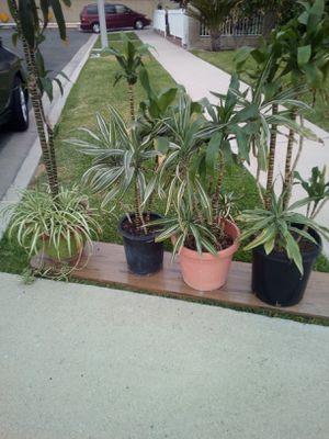 Plants Various for Sale in Orange, CA