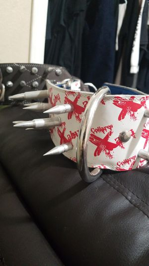 Dogs Collars for Sale in Hayward, CA