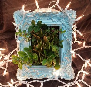Vintage Frame with live Succulents for Sale in Corona, CA