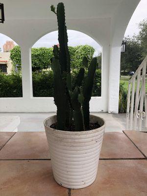 Emerald Ripple Catus | 3' tall with planter for Sale in Miami, FL