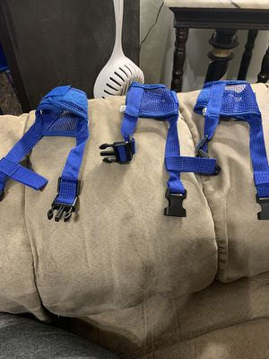 Dog muzzles for Sale in Edgewood, MD