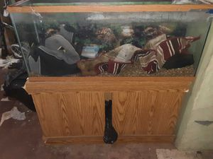 55 Gallon fish tank with stand for Sale in Williamsport, PA
