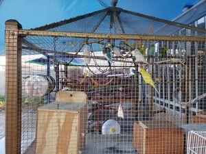 Huge bird cage for Sale in Fullerton, CA