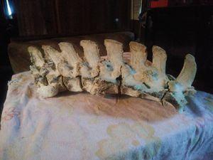 Dinosaur vertebrea real for Sale in Desert Hot Springs, CA