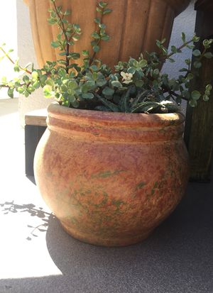 Small pot with succulent for Sale in Carson, CA