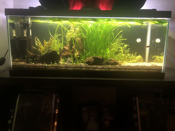 Fish Tank JUNGLE VAL PLANT FOR SALE!!!🌱