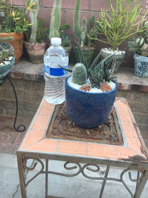 Ceraramic Centerpiece with different type of succulent for Sale in Bloomington, CA