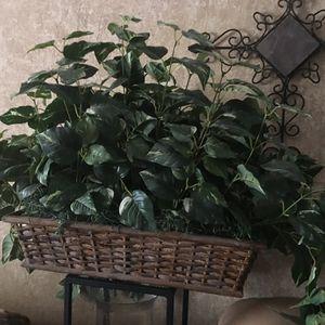 Big Fake Plant for Sale in Phoenix, AZ