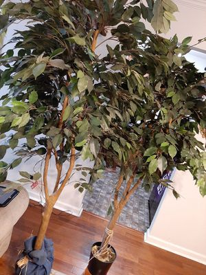 2 Indoor faux trees for Sale in Franklin, TN