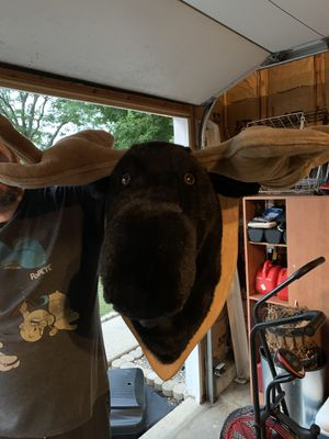 Bigame Trophies stuffed Moose, Wolf and Ram for Sale in Aurora, IL