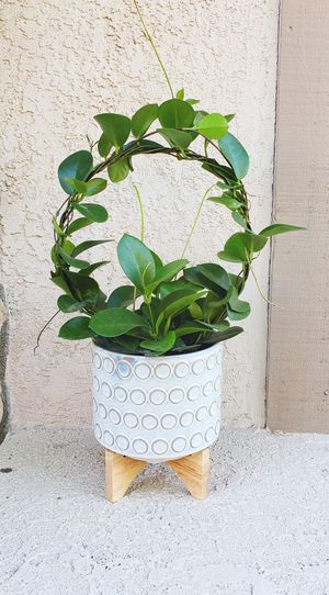 Gorgeous lush hoya plant with modern planter pot for Sale in Riverside, CA
