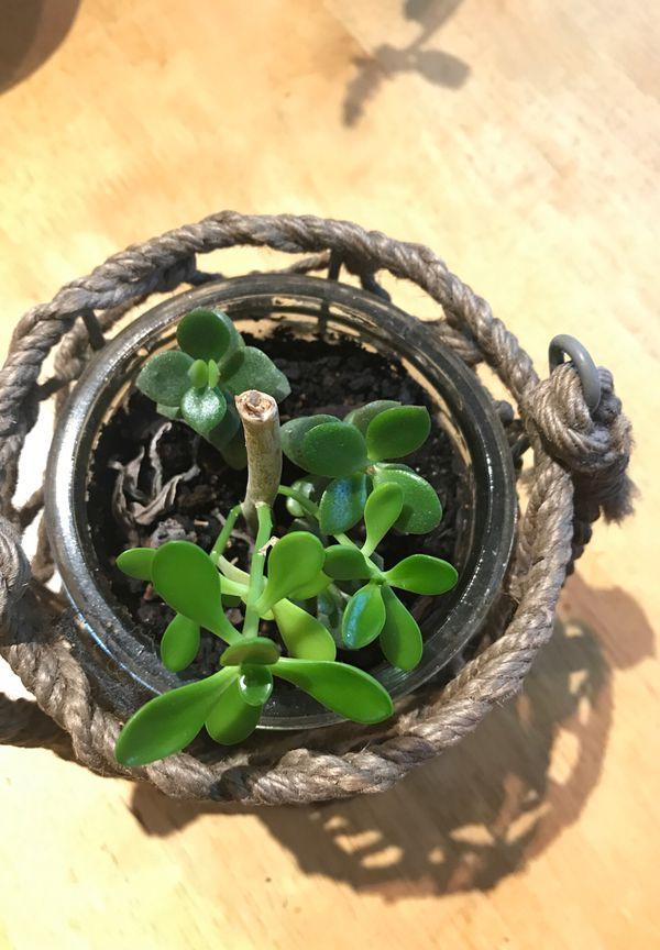 Unique planter with handle and bonus succulents