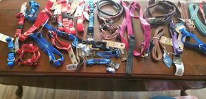Dog leashes harnesses and collars for Sale in Webster, MA