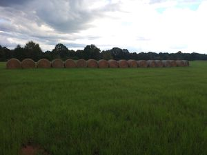 Hay for Sale in Tyler, AL