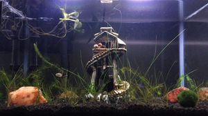 Fully Planted Aquarium for Sale in Bakersfield, CA