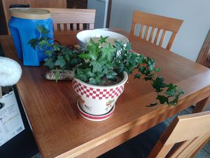Healthy Fern comes in pot for Sale in Price, UT