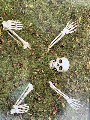 Buried skeleton for Sale in Sunland-Tujunga, CA