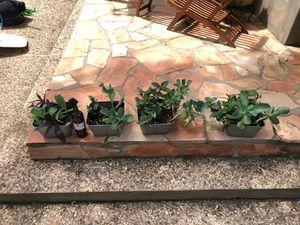 Plants in tin pots 🌱 established plants for Sale in San Antonio, TX