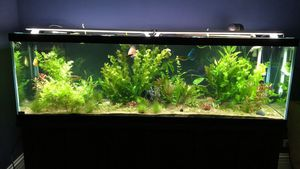 125 gallon aquarium for Sale in Park Ridge, IL