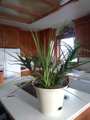 Beautiful Healthy Plant for Sale in Price, UT