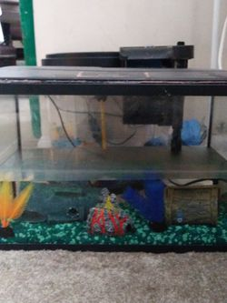 5 Gallon aquarium set up... for Sale in Silver Spring,  MD