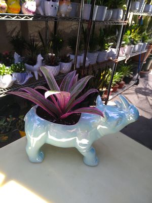 INDOOR PLANT for Sale in Paramount, CA