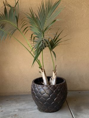 Potted plant. HEAVY for Sale in Murrieta, CA