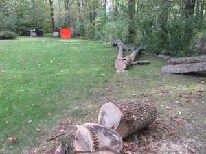 FREE FIREWOOD for Sale in Moreland Hills, OH