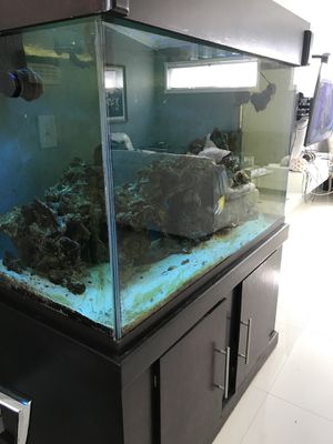 55 galón fish tank! Worth1000 everything include for Sale in Hialeah, FL