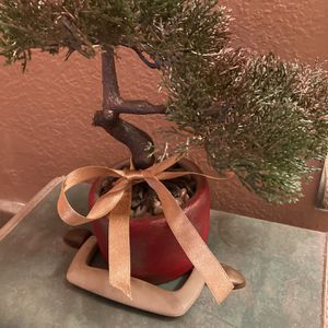 Bonsai for Sale in Corona, CA