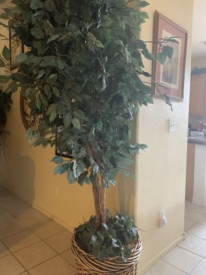 Plants for Sale in Las Vegas, NV