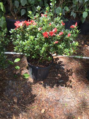 Plant for Sale in Sanford, FL