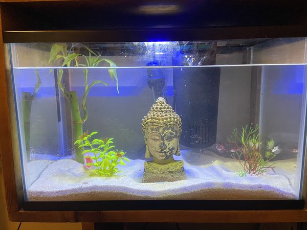 5 gallon aquarium (inc. filter and heater)
