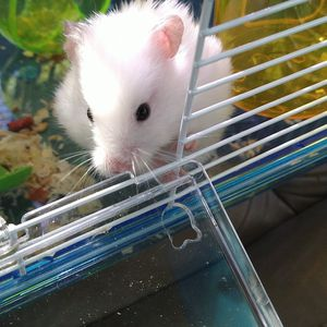 Hamsters For Sale <3 for Sale in Baldwin Park, CA